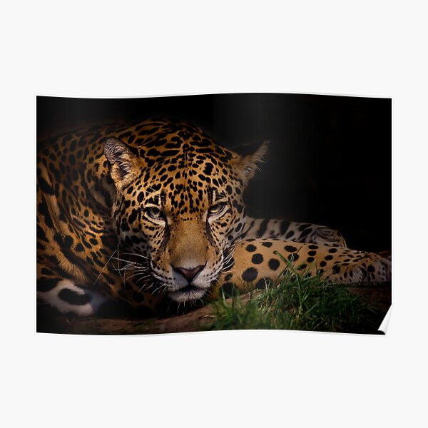 Tiger Cub Cute Sweet Cat Wild Animal Poster Cat Love Family Kiss Picture Print