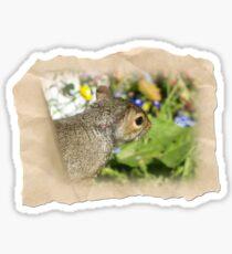 SQUIRREL and FLOWERS Sticker