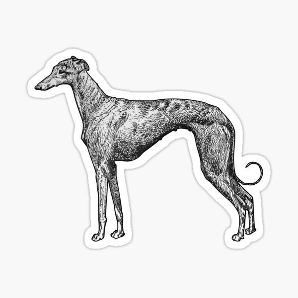 Greyhound Sticker