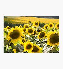 Sunflowers 13 Photographic Print
