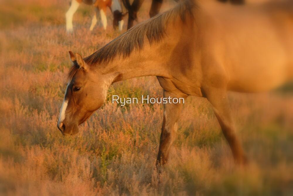 Horse Head Bent by Ryan Houston