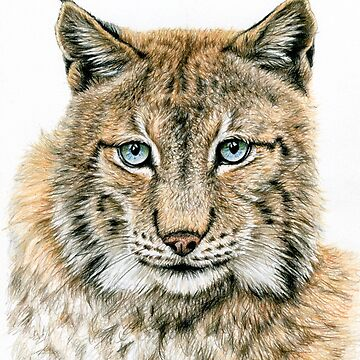 The Lynx - Der Luchs by ArtsandDogs