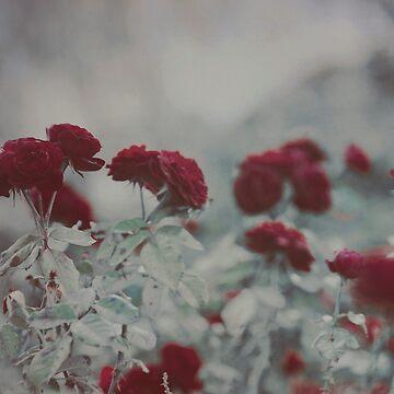 Velvet Red by EmiBlackBox