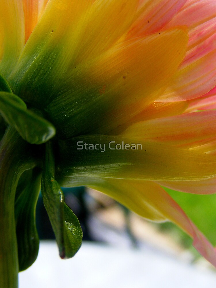 Many Colors of Beauty by Stacy Colean