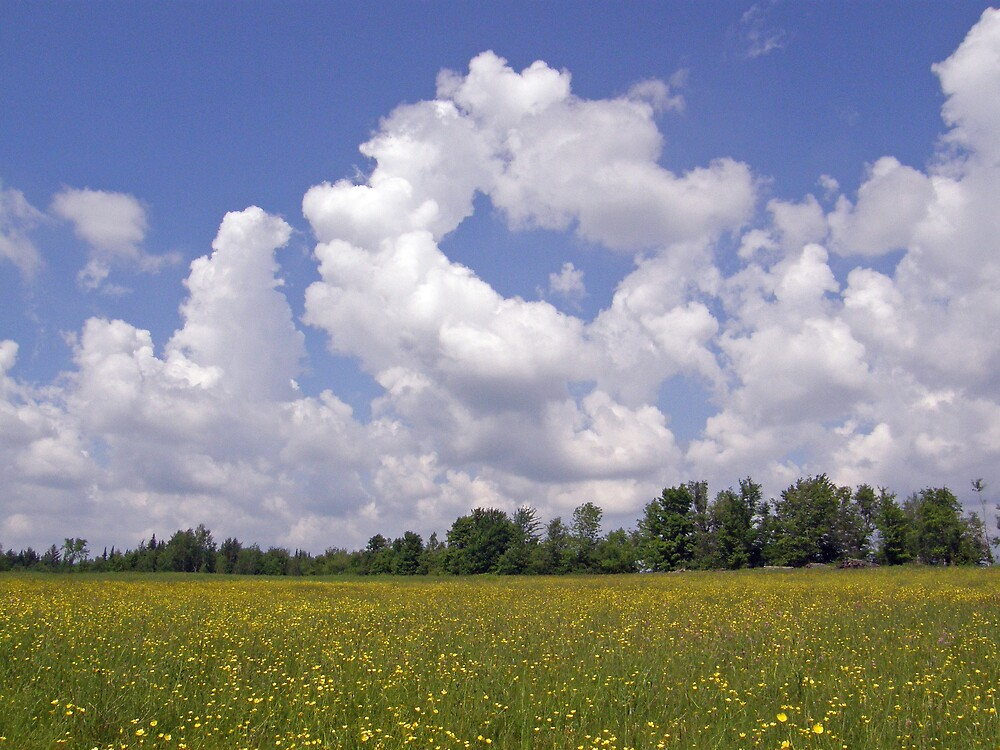 Buttercups Flowers And Clouds by marchello