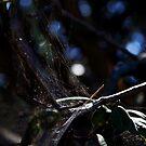 A web with a dash of bokeh by myraj