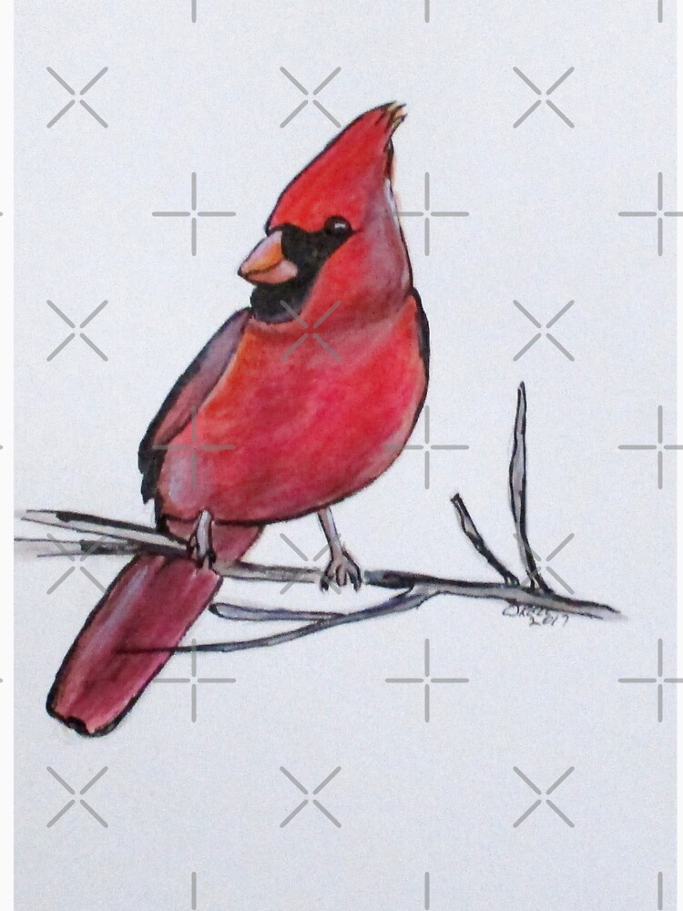 Northern Cardinal by cjkell
