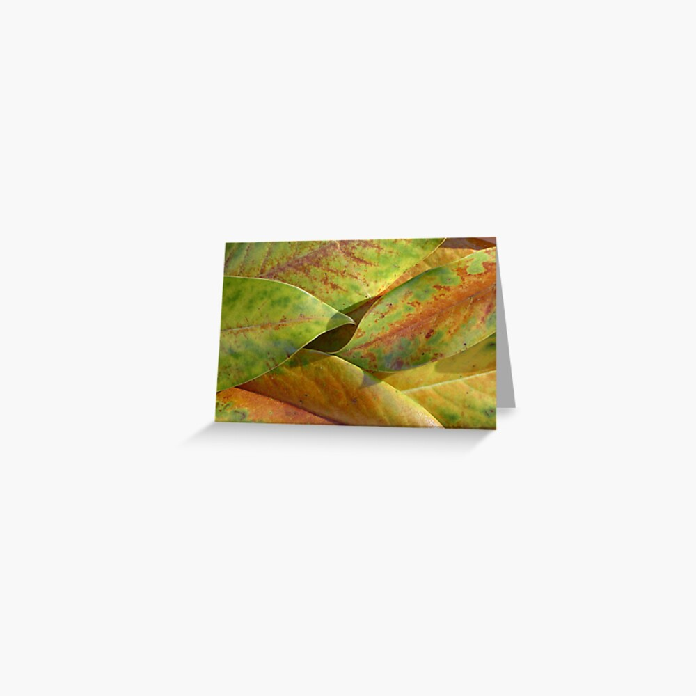 Magnolia leaves in provence autumn Greeting Card