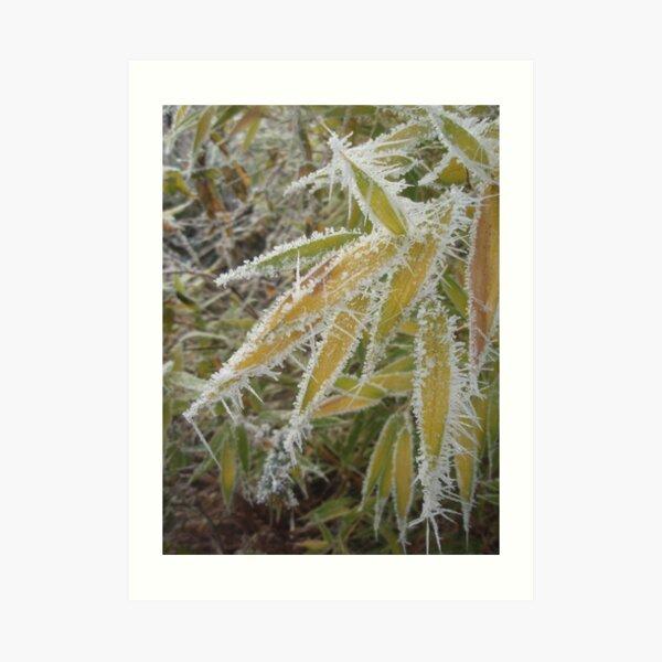 winter bamboo Art Print