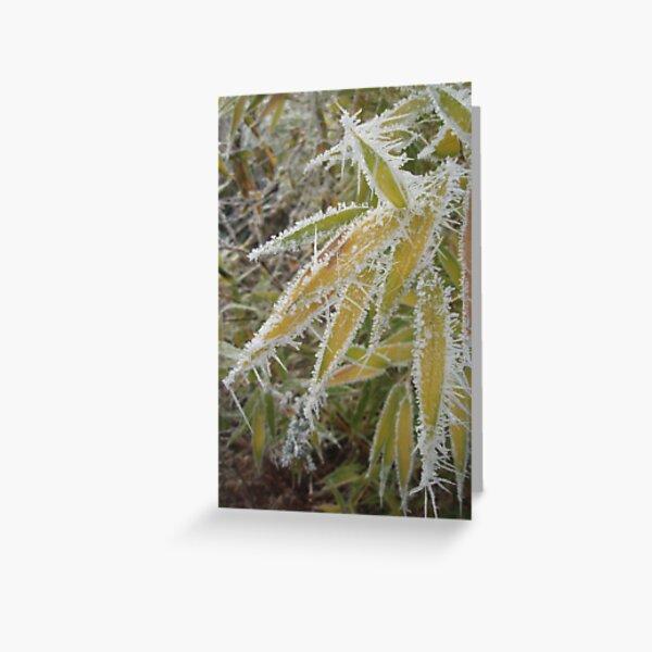 winter bamboo Greeting Card
