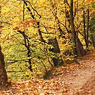Autumn 10 by Dominika Aniola