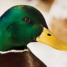 Mr Duck by Dominika Aniola