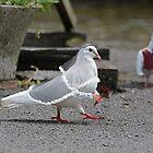 Dove Wedding by Felfriast