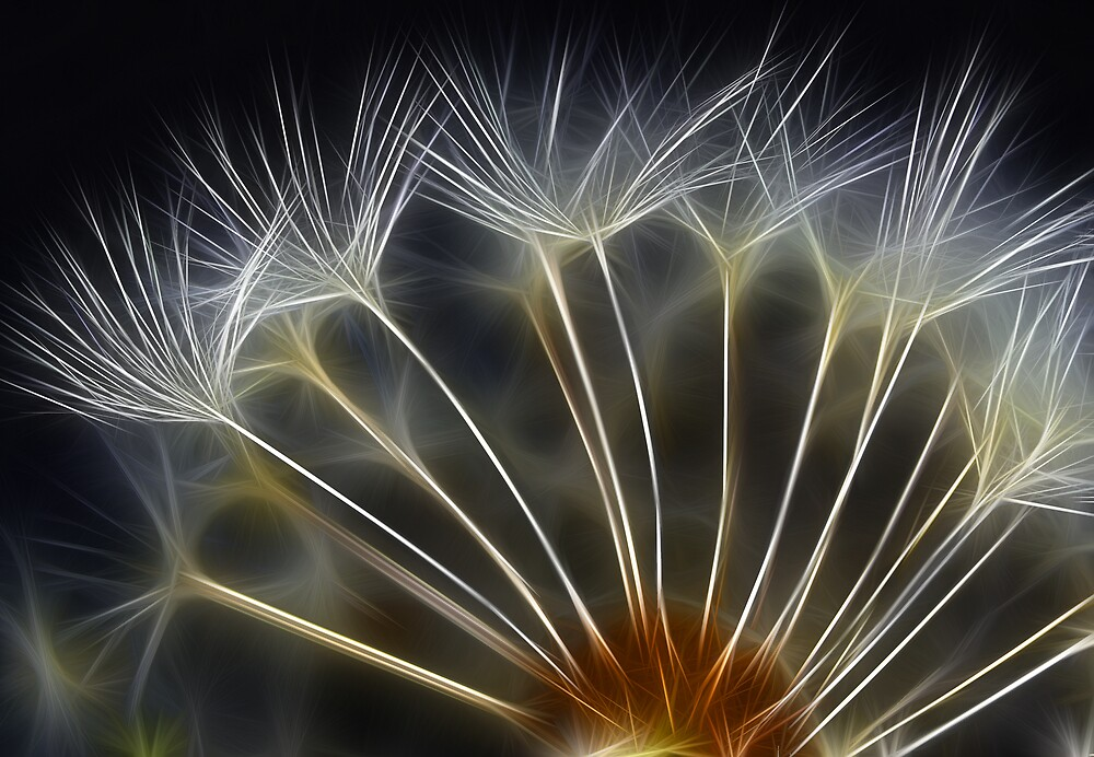 Dandelion by Darren Post