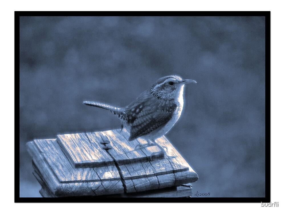 morning perch by budrfli