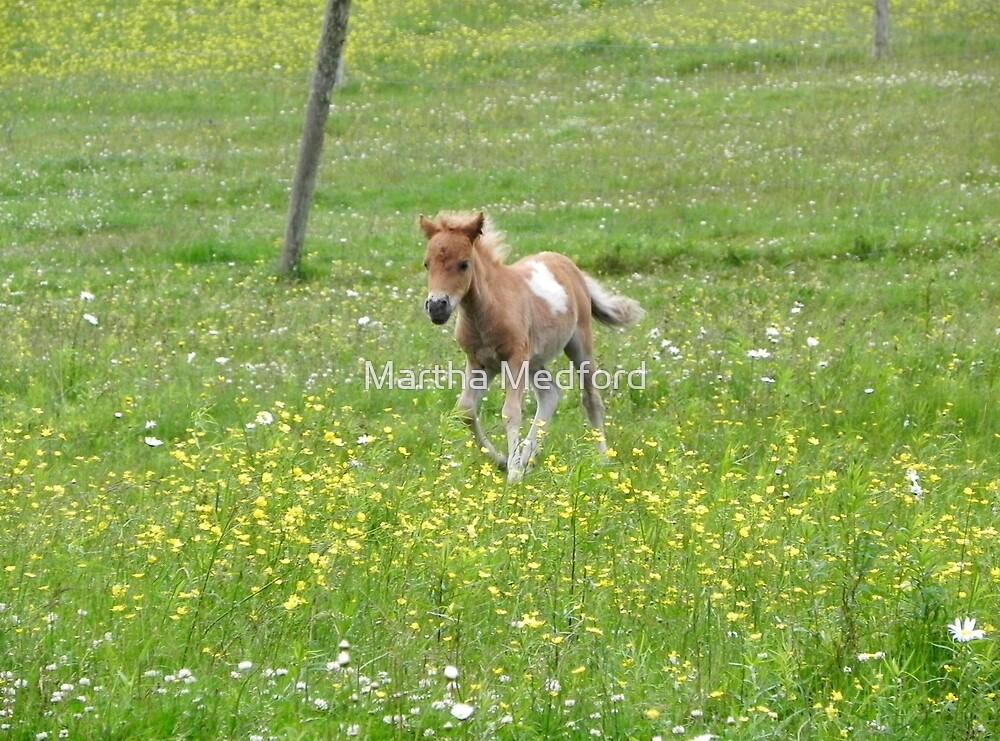 Running Free by Martha Medford
