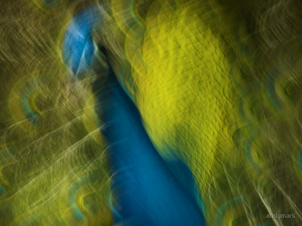 peacock abstract by andymars