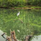 Spoonbill on a tranquil lake by Michael Matthews