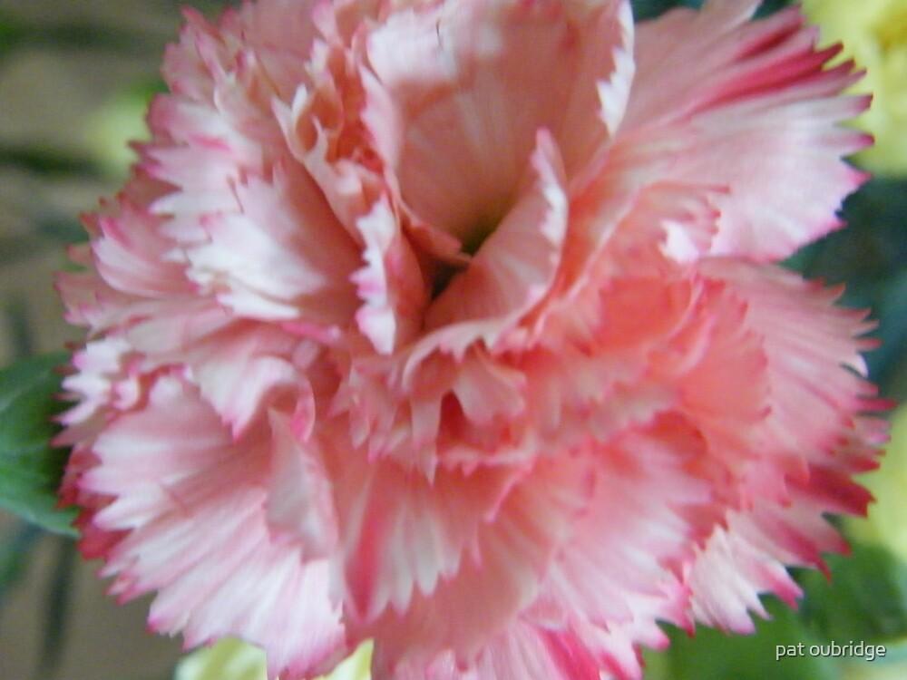 Carnation Bloom by pat oubridge