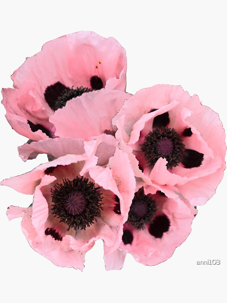 Poppies in the pink by anni103