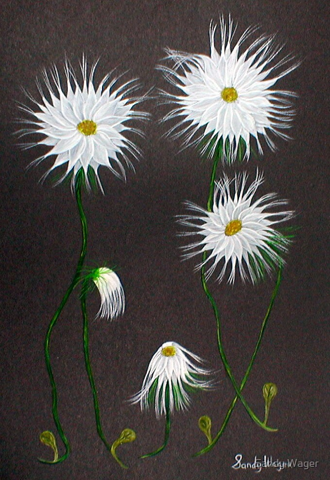 Daisies 1 by Sandy Wager