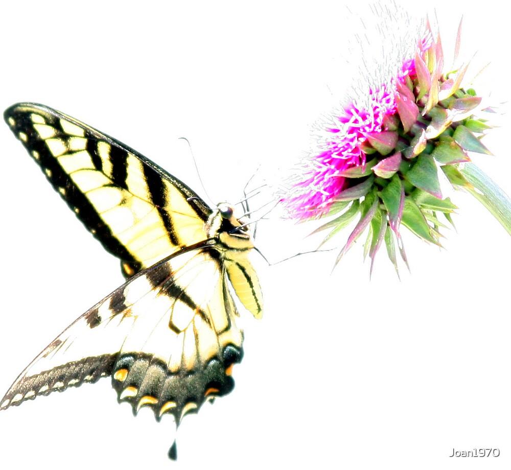Butterfly Series 4 by Joan1970