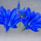 Painted Gentian Flowers by jacqi