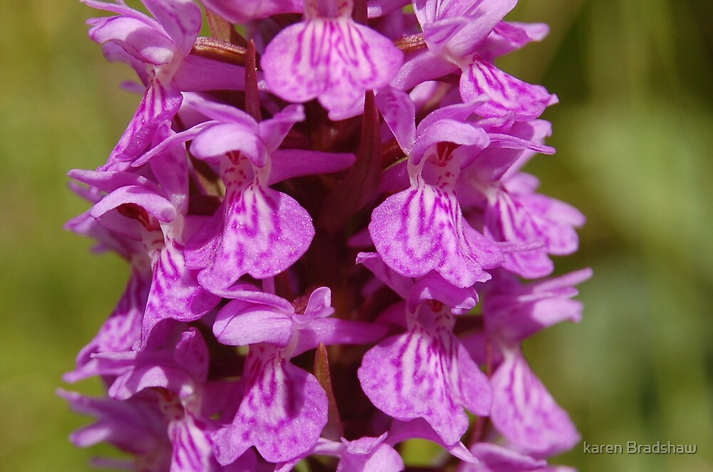 Orchids??? by karen Bradshaw