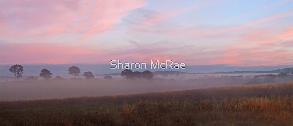 Foggy Sunrise Pano by SharonD
