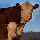 Cow Talk by Wendy C. Fike