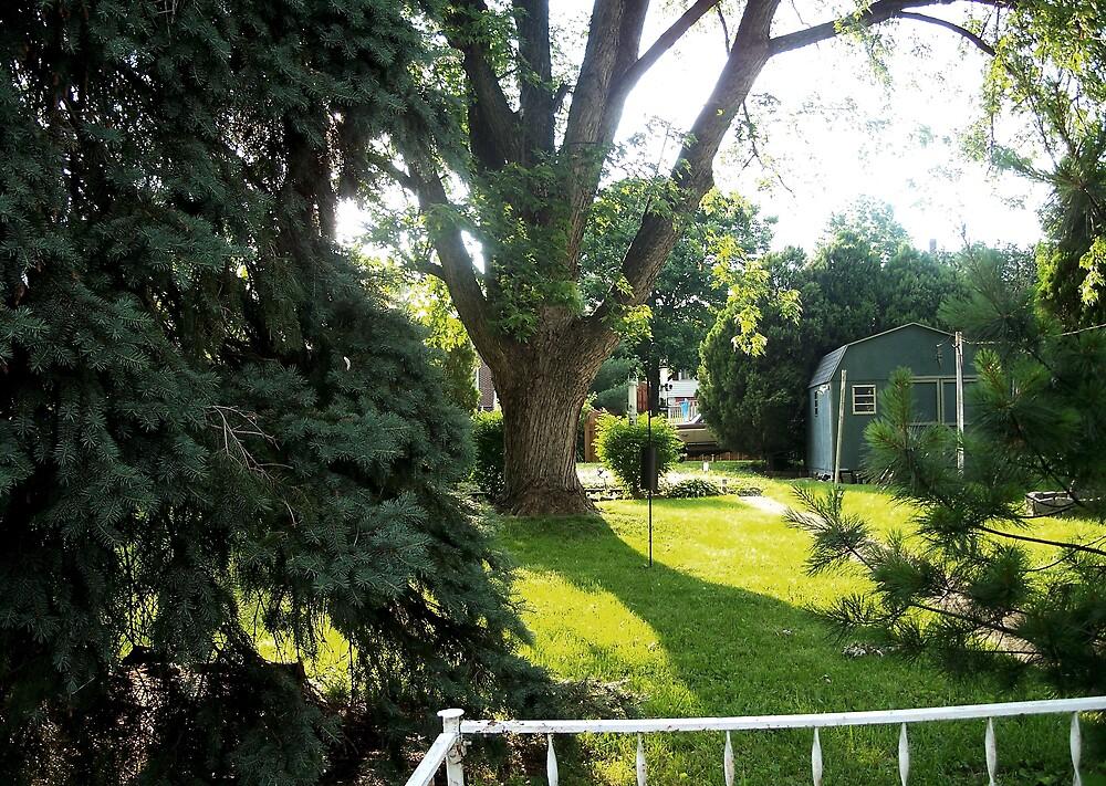 My backyard   by Judi Taylor