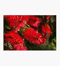 Bottle Brush Abstract 2 Photographic Print