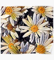 Happy Little Daisies Poster