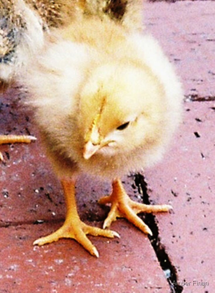 Baby Chick by Amber Finan