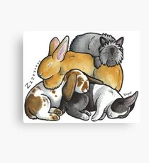 Sleeping pile of pet rabbits Canvas Print