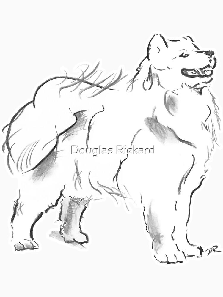 Samoyed Drawing by douglasrickard