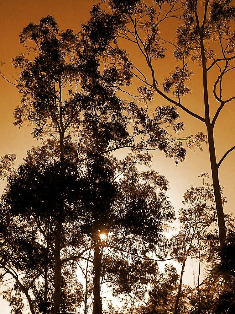 Burning Gum Trees by Bianca Smart