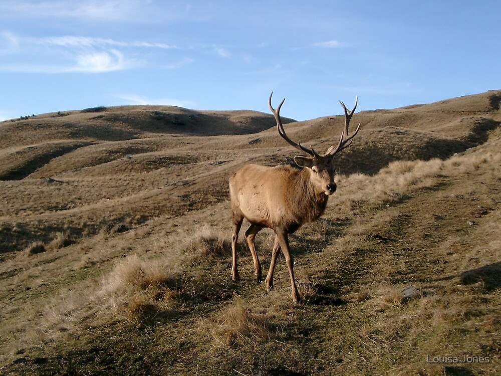 Deer by Louisa Jones