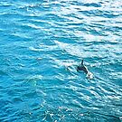 Dolphin by Ben de Putron