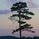Tree With A Purple Sky by James Brotherton
