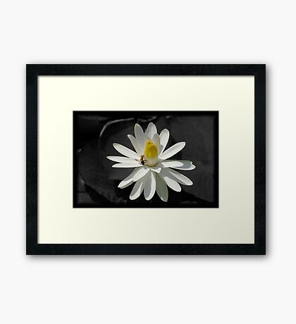 White lily Framed Art Print