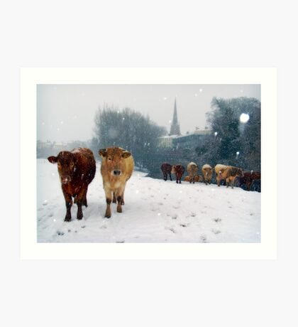 Cattle in the snow, Monmouth, Wales, UK. Art Print