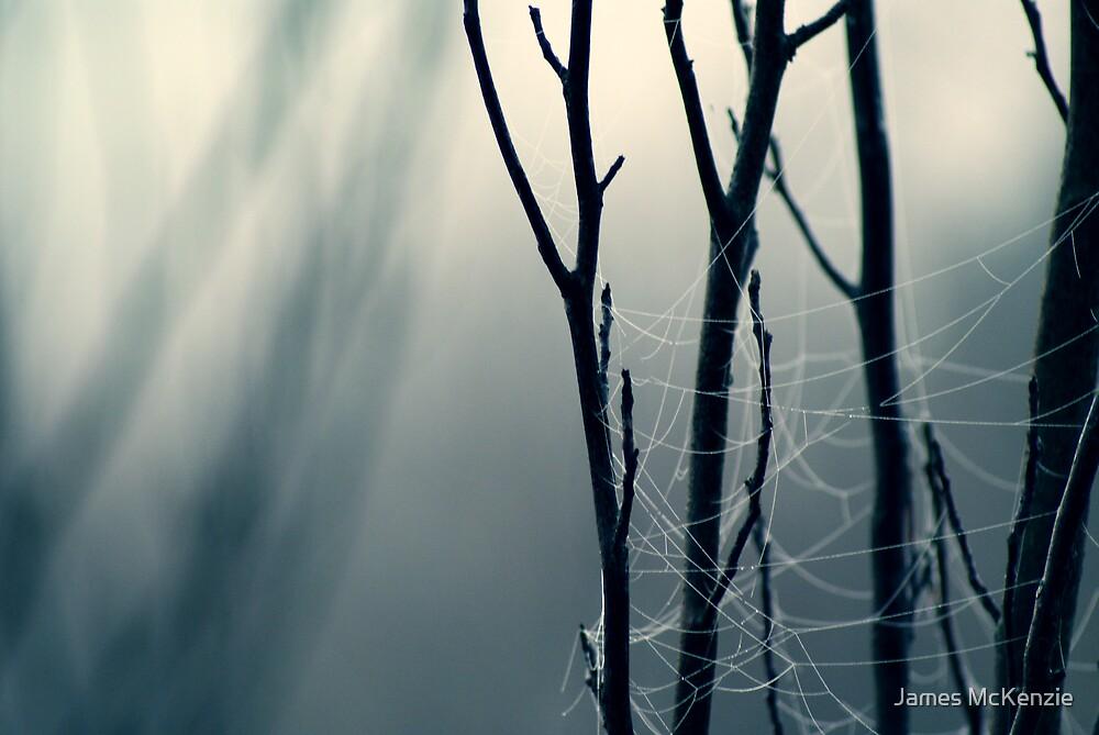 Moonlit Lattice by James McKenzie