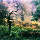 Haunted Garden by Ern Mainka