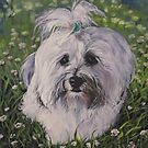 Havanese Fine Art Painting by lashepard