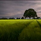 Fields of Barley by Tony Murphy