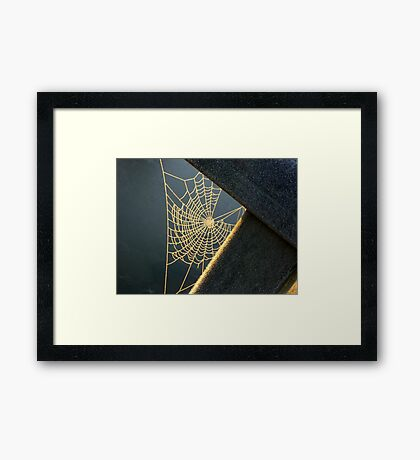 Sunkissed Web Framed Print