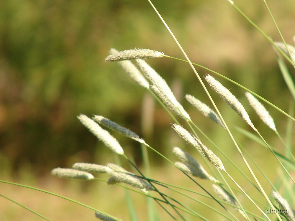 Wild Grasses by eltotton