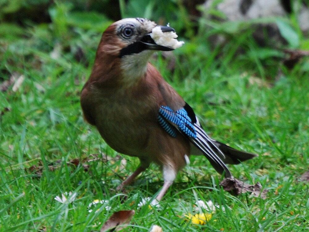 bird by ampwizbit