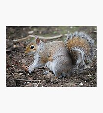 squirrell Photographic Print